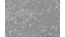 03_1550295327-cde7bb65b81f9eba93e88077586e33cd.jpg